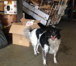 Albergue no centro de SP abriga cães junto ao seus donos