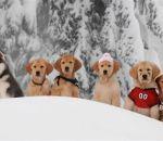 Cinco cães morreram durante as gravações de um filme da Disney