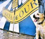 Águia de Ouro encerra 1º dia com enredo sobre cachorros e proteção dos animais