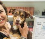 Lola é a primeira cadela a ser registrada em um cartório do Rio