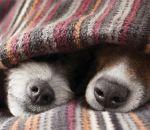 Frequência do banho deve ser reduzida no inverno; saiba cuidados com animais
