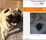 Família reconhece cachorro desaparecido em site de classificados