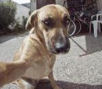 Aprenda como tirar selfies com seu cão em 5 dicas
