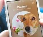 'Tinder' para cachorro ajuda a você adotar o animal ideal