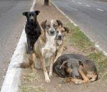 Três quartos dos cães do mundo não têm um lar, diz estudo