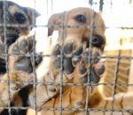 O abandono de animais nas ruas virou um grave problema para a cidade