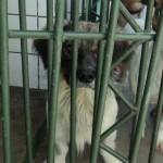 Biografia de um cão sem dono