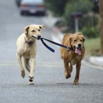 4 dicas para melhorar o passeio do seu cachorro