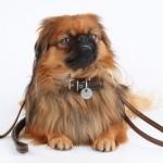 Escolha a coleira ideal para seu cachorro