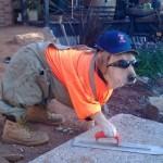 Cães melhoram o ambiente de trabalho