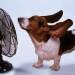 Tome cuidado com o seu cão no verão