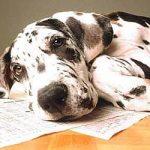 Leishmaniose Visceral: tire seu cão dessa