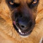 Dhomini diz ter torturado um cachorro