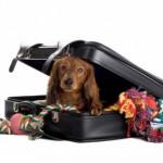 Nas férias, leve seu cão com você