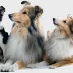 Como ser o líder do seu cão