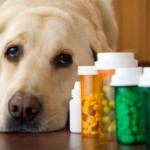 Cães fazem bem a saúde, diz estudo