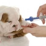 Cuidados na vacinação