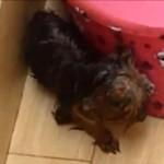 Julgamento da enfermeira que torturou cão é adiado