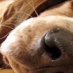 Salve um animal envenenado