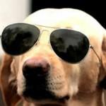 11 dicas para viver com um cão cego