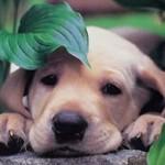 Cuidado com plantas venenosas