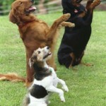 Comandos básicos para adestrar um cão