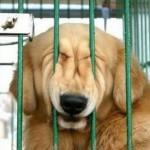 Santos terá um novo abrigo para animais
