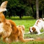 Comandos básicos para o seu cão