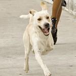 Após sofrer maus-tratos, cão conquista jovens