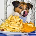 Alimentos que cão não deve comer