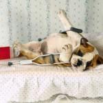 Como evitar acidentes domésticos em 6 dicas