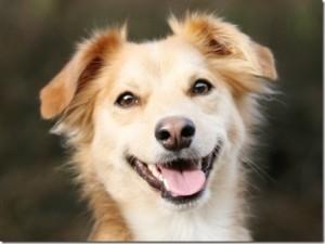 cachorro-feliz-pelos