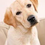 Sete mitos sobre os cachorros