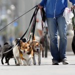 Melhore o passeio do seu cão