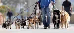 passeando-cachorro2 (5)