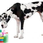 10 produtos que podem ser fatais para o seu cão
