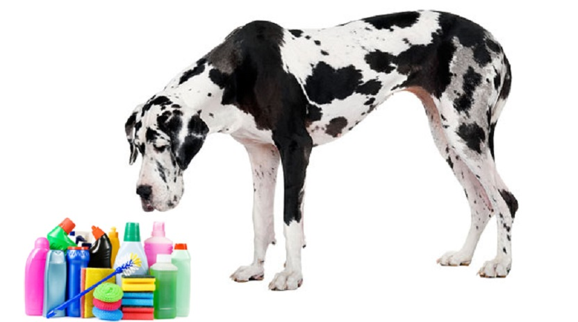 118551815-632x353-dog-with-cleaning-products