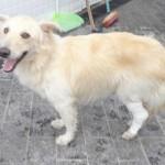 Cão resgatado pelo CCZ, Guarujá