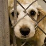 Como lidar com cães abandonados