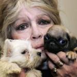 Brigitte Bardot apela contra matança na Romênia