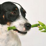80 plantas que podem envenenar o seu cão