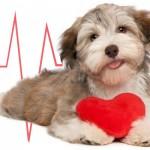 Cachorros fazem bem ao coração
