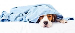 cachorro-doente (1)