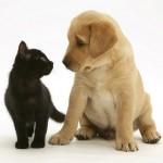 Cão ou gato, quem é o melhor?