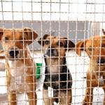 Adoção de cães é tema de mestrado na USP