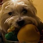 Frutas perigosas para o seu cão