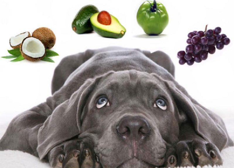 frutas-proibidas-caes