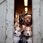 As maiores populações caninas do mundo