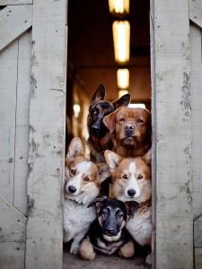 muitos-cachorros