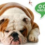 Conheça a campanha: 'O cão não é o vilão'